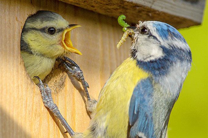 Vogelhäuser bunt Nistkasten Nisthilfe Vogelkasten Holz Bruthilfe Vogelhäuschen