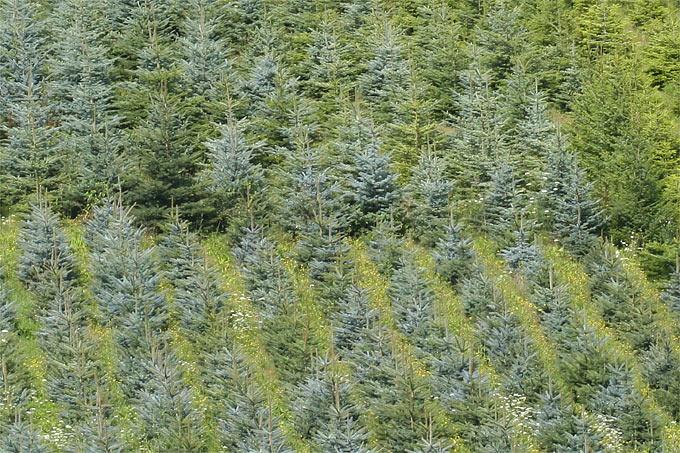 Tannenbaum Kaufen Dortmund.Nabu Nrw Rät Zu Weihnachtsbaum Aus Bioanbau