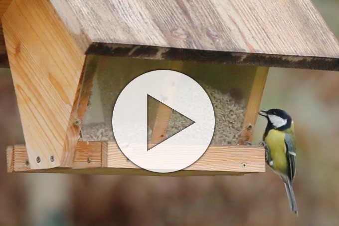 Lern-Video zur Vogelbestimmung