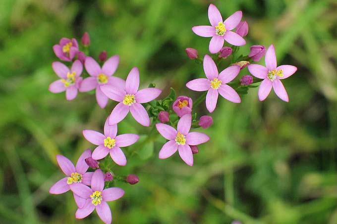 Pflanzen Nabu Nrw