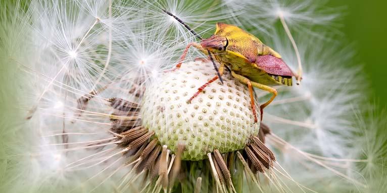 Insektenrückgang