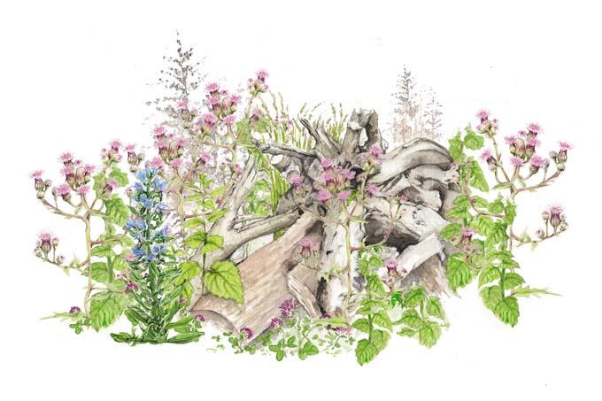 Wilde Ecke - Illustration: Stefanie Gendera