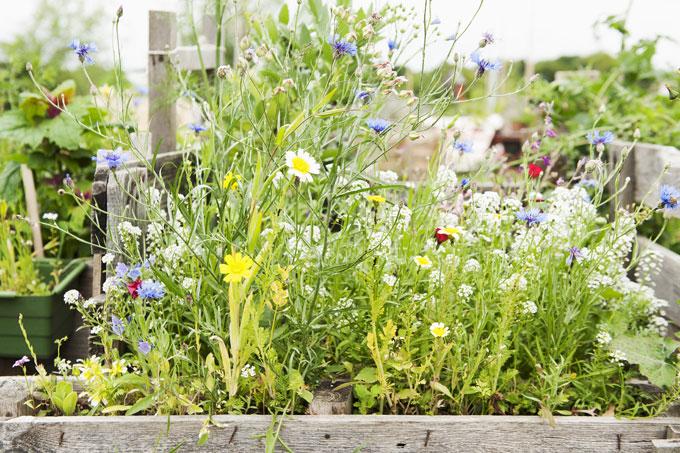 Urban gardening - Foto: NABU Sara Reuter BEST-Sabel
