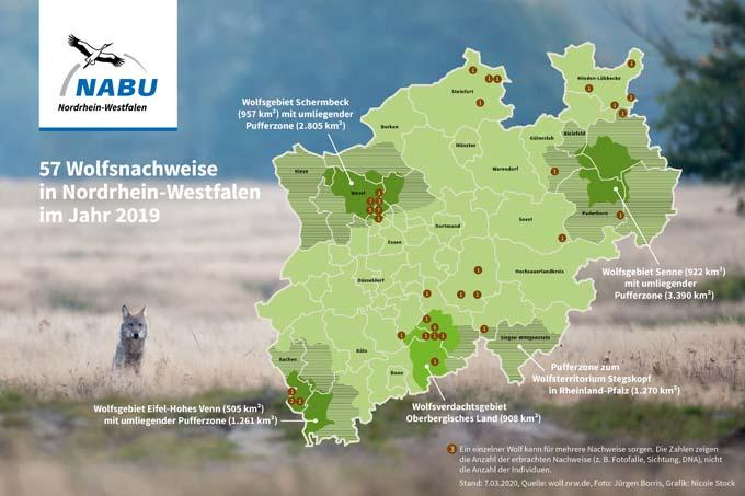 Verbreitung Des Wolfs In Nordrhein Westfalen Nabu Nrw