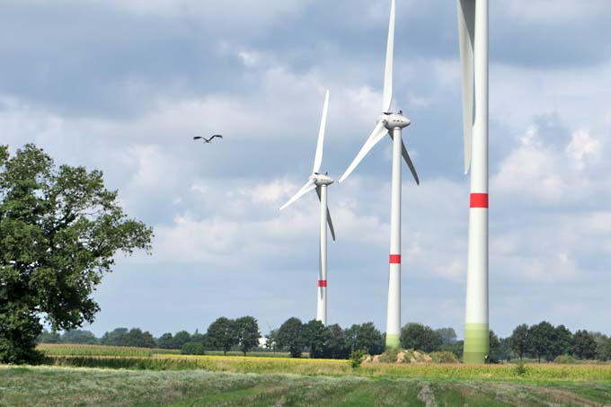 Storch fliegt im Windpark - Foto: Kerstin Lohmeyer