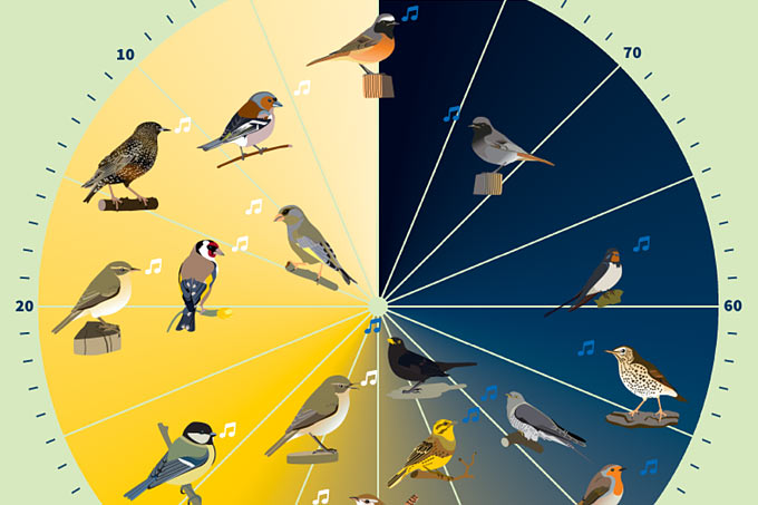 b6068b9b781 Doch nicht jeder Vogel stimmt zur gleichen Zeit ein. An der Vogeluhr können  Sie ablesen, wie viele Minuten vor Sonnenaufgang die Vögel mit ihrem Gesang  ...