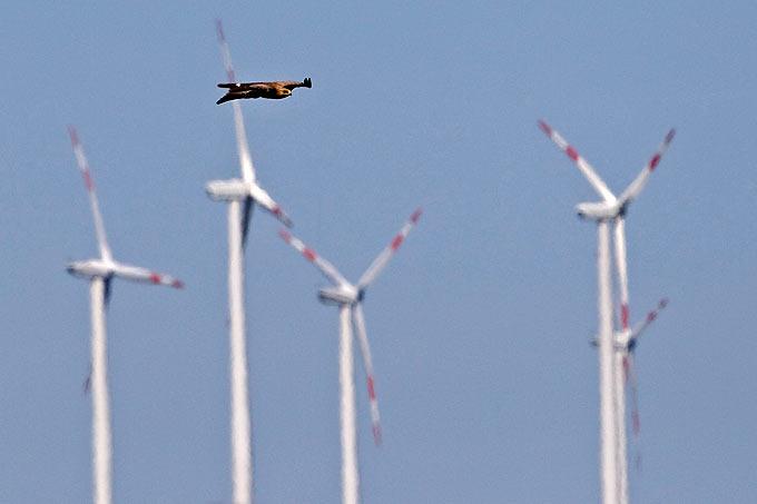 Naturverträglicher Ausbau der Windenergie